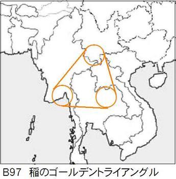 B97 稲のアングル.jpg
