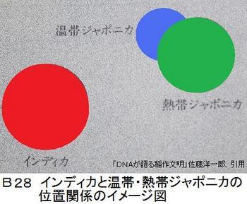 B29インディカ.jpg