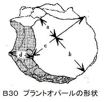 B30P・O形状.jpg