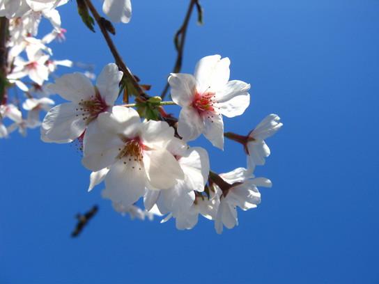 2008-04-01-1 035.jpg