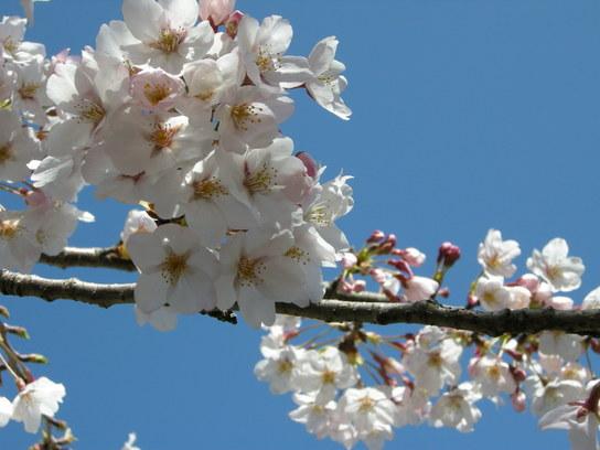2008-04-011 191.jpg