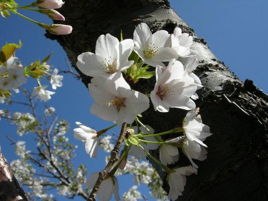 2008-04-011 249.jpg