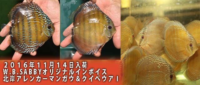 11月14日入荷マンガウ640.jpg