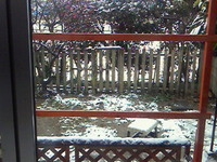 2013.1.17出雲の雪.jpg