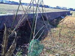 2011年2月22日畑へちま棚.jpg