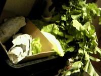 2012.11.13和泉さんちの野菜.jpg