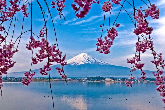 河口湖の富士と桜 09041915.jpg