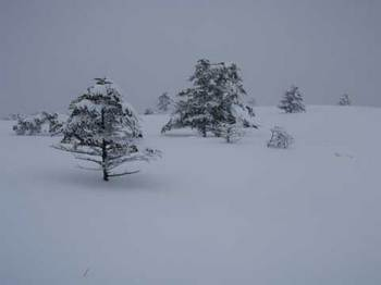 29-2008-02-02-15-53-ushinose_0.jpg