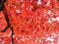 紅葉'10-11.jpg