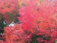 紅葉'10-19.jpg