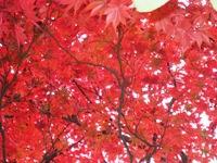 紅葉'10-20.jpg