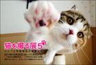 2011猫を撮る展バナー.jpg