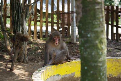 気付いてしまった猿その1