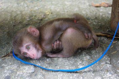 気付いてしまった猿その2