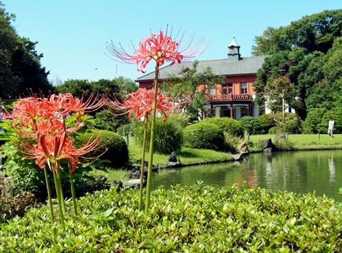 小石川植物園.jpg