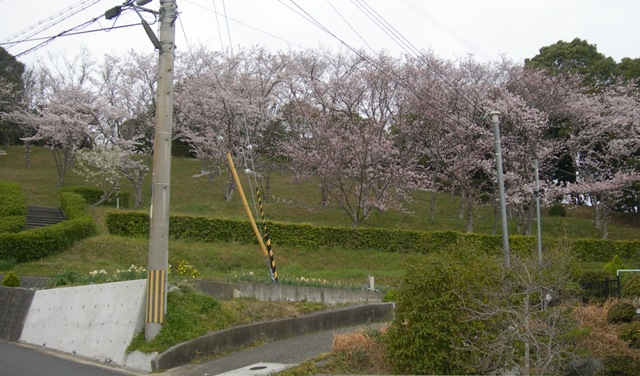 水仙の丘2.JPG