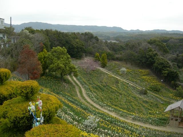 水仙の丘20.JPG