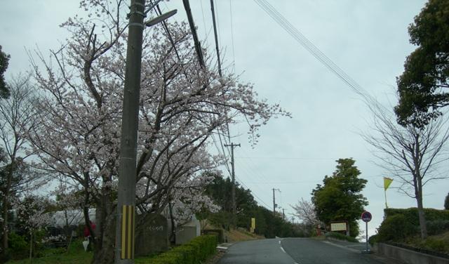 水仙の丘5.JPG