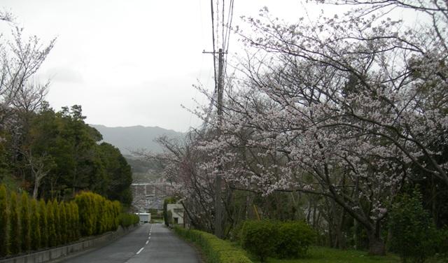 水仙の丘6.JPG