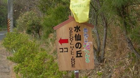 水仙の丘9.JPG