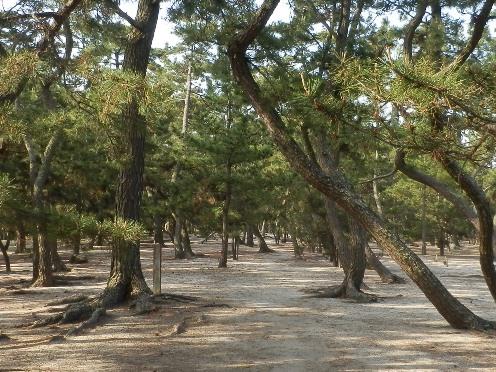 緑の道しるべ慶野公園21.jpg