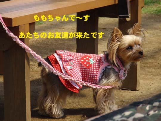 103_273_momo_540.jpg