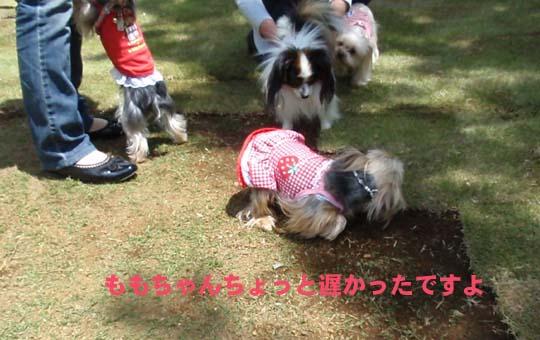 104_037_momo_c.jpg