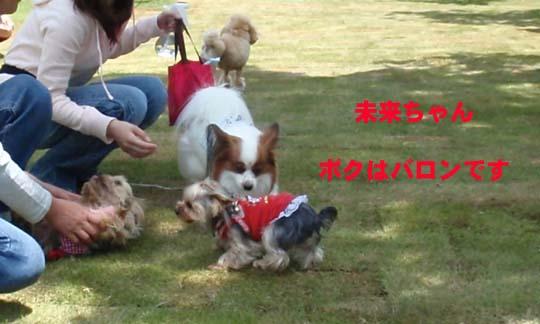 106_089_miku_b.jpg