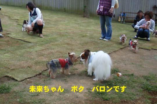 112_227_b_miku.jpg