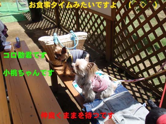 114_283_koro_komomo.jpg