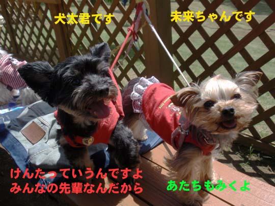 115_285_kenta_miku.jpg