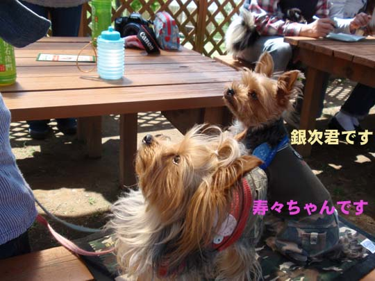 116_289_ginji_suzu.jpg