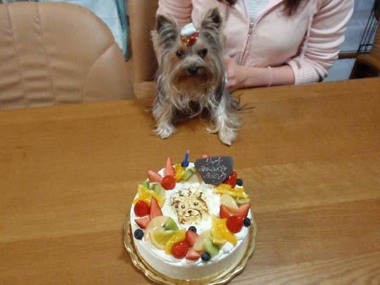 15_421_cake.jpg