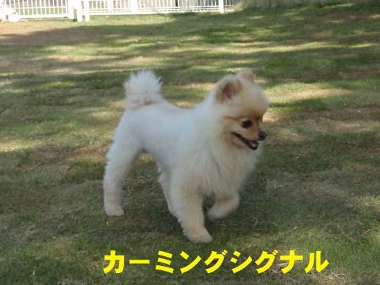 406_666_yakko.jpg