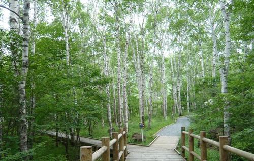 八千穂公園自然園