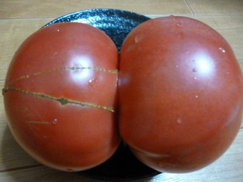 ツイントマト.JPG