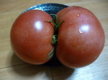 ツイントマト2.JPG