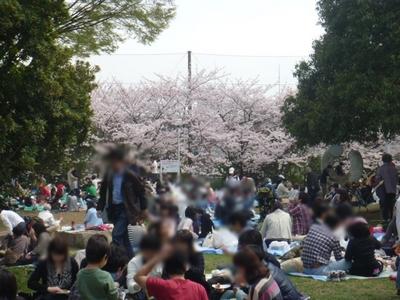 花見風景.JPG