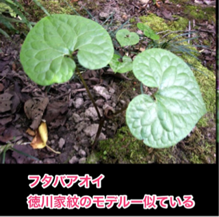 image-20120612124325.png