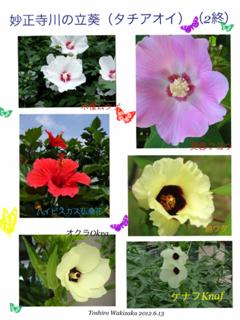 image-20120612163050.png