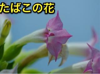 image-20120712164546.png