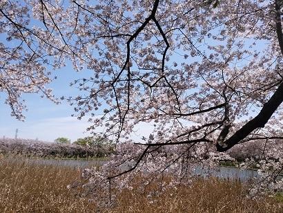 晴れた日の福祉村2.jpg