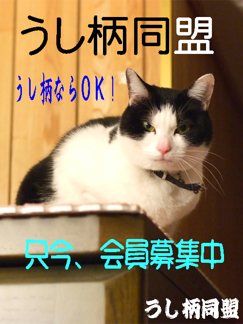 ポスター090518.jpg