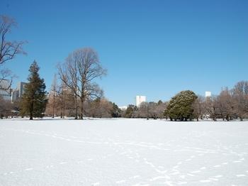 Shinjyuku Garden Snow (10)_S.JPG