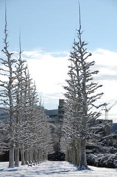 Shinjyuku Garden Snow (11)_S.JPG