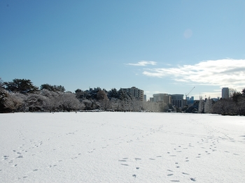 Shinjyuku Garden Snow (9)_S.JPG