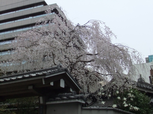 2011_0403s.JPG