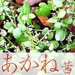 akane_pic[1].jpg