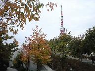 20081113.jpg