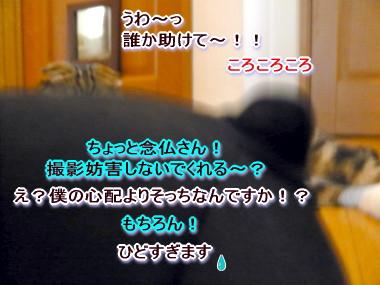 だら~6.jpg